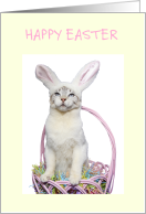 Happy Easter Funny cat in bunny ears. card