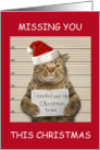 Missing you this Christmas incarcerated cat in Santa hat. card