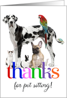 Thanks for pet sitting, any animal colorful custom photo card