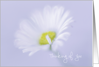 White Daisy Thinking of You Offer to Help card