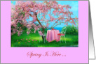 Springtime Party Invitation/Cherry Blossoms/Chairs card