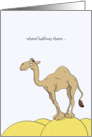 Hump Day Cards, Camel Standing On A Sand Hump Cartoon card