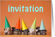 Invitation card with puppy dogs with party hats card