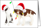 Cute Puppy and Kitten Christmas Card