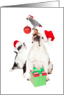 Dog Cat and Bird Together For Christmas card