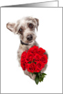 Apology Card With Cute Dog Delivering Roses card