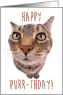 Tabby Cat Wishing Happy Purr-thday card