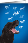 Happy Birthday For Anyone Laughing Dog Humor card