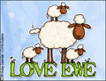 love, love ewe,love you,sheep,sweet,friend,lover,wife,husband,girlfriend,boyfriend,