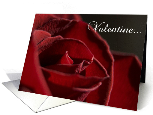 Valentine's Day - Red Rose Flower card (336525)