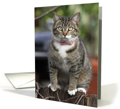 cat on the fence card (1046919)