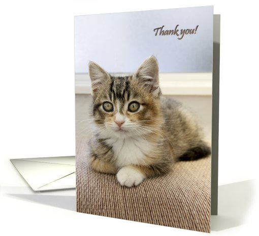 Thank you with a kitten card (748798)