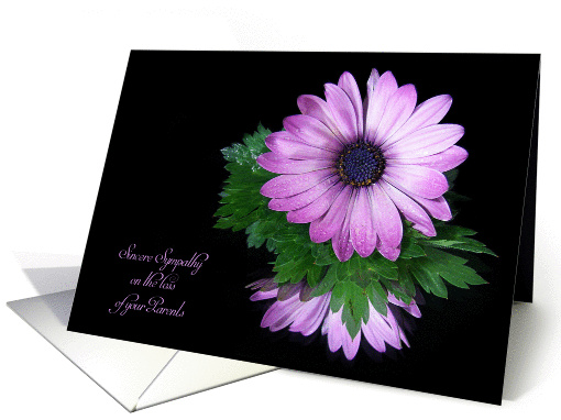 Loss of Parents sympathy-purple daisy reflection on black card