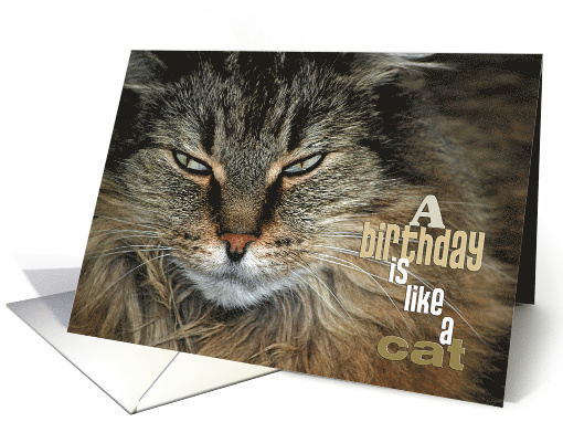 Birthday humor-close up of a Maine Coon cat card (338270)