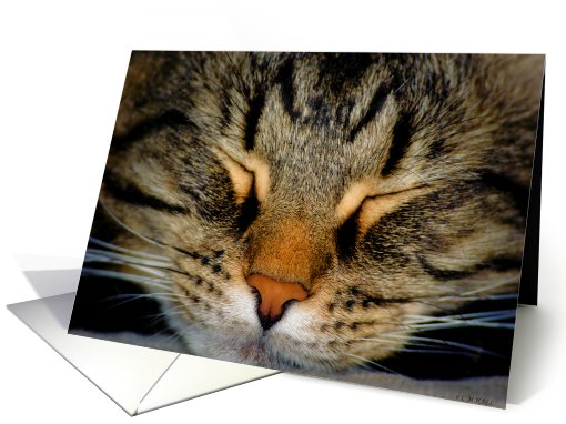 Cat Face Maine Coon Blank card (593793)