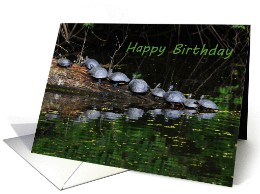 Nine Turtles On A Log card (851738)