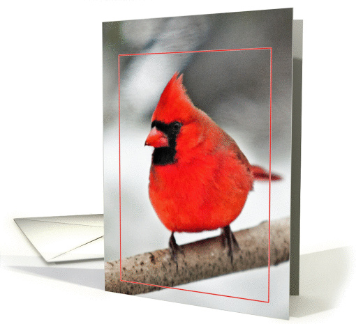Cardinal on a Branch Two card (769833)