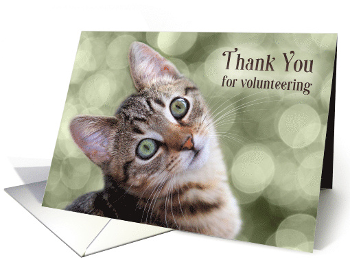 Volunteer Thank You Gray Cat on a Gold Aztec Patterned Pillow card