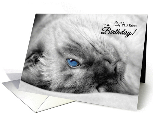 Blue Eyed Siamese for Cat Lover's Birthday card (592106)