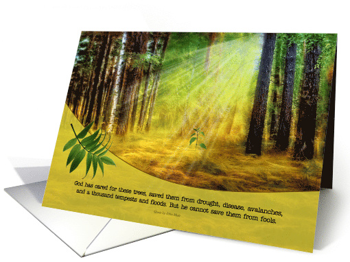 Earth Day Sun Kissed Forest Floor with New Growth card (903165)