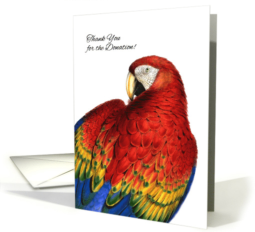 Donor Thank You Business Rainbow Macaw Parrot Blank card (958619)