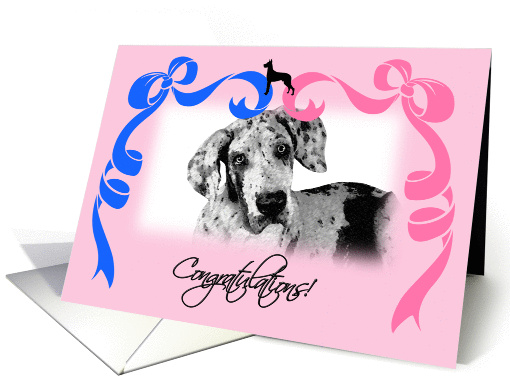Congratulations on the New Litter - Great Dane card (1214036)