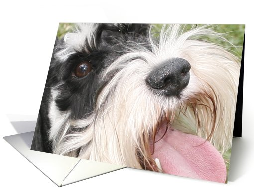 Oliver the Miniature Schnauzer card (428756)