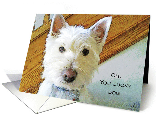 You Lucy Dog, Congratulations, Westie Dog Looking at You card (827513)