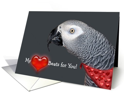 Funny Valentine African Grey Parrot card (548385)