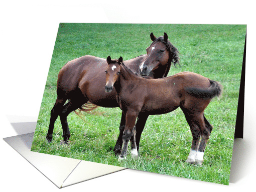 Mother's Day, humor, Mother horse and her colt in a grassy field card