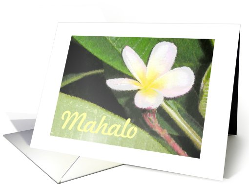Mahalo and Thanks for Everything Yellow Plumeria card (696345)