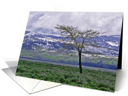 Tree And Snow Wyoming Morning Grand Teton Blank Note card (799916)