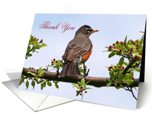Robin Thank You In Flowering Tree card (817776)