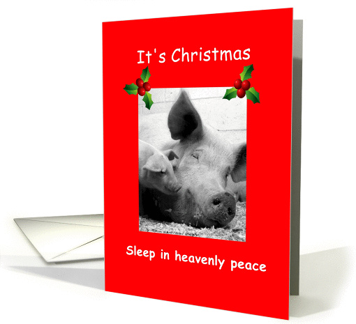 Christmas pigs sleeping, hogs sleeping in heavenly peace,... (872276)
