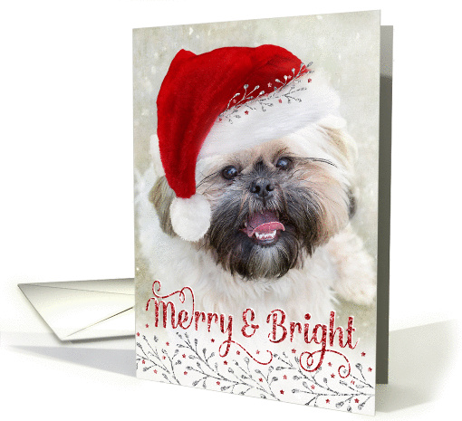 Cute Christmas Card - Shih Tzu in Santa Hat - Merry and Bright card
