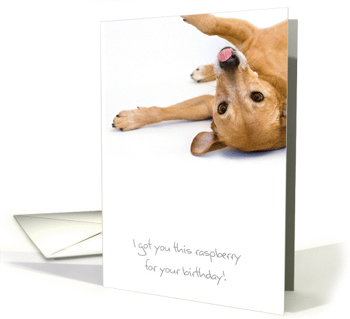 Birthday Card - Humorous Dog Sticking Out Tongue card (794631)