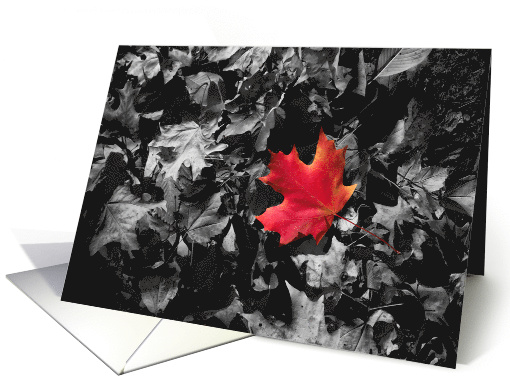 Red Maple Leaf Blank Inside Any Occasion card (1544136)