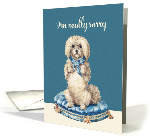 I'm really sorry, Vintage Dog on Blue Tufted Cushion card (1359888)