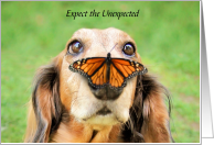College Encouragement Expect the Unexpected Dog with Butterfly on Nose card