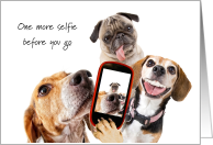 Friend Off to College Funny Dogs Selfie Picture Good Bye card