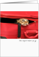 Off to College Moving Tabby Cat Stowaway in Luggage Take me with you Humor card