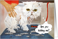 Sympathy Pathetic Persian Cat : Bad Day card