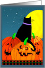 Plump Halloween Black Cat on Scary Jack O' Lanterns Under Full Moon card