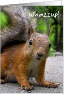 Whazzup! Squirrel card