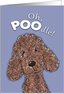 Get Well-Humorous Poodle card