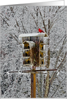 Red Cardinal Birdhouse Winter Landscape Note card