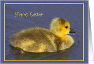 Duck Easter Cards Paper Greeting Cards