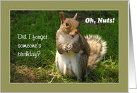 Oh Nuts - Belated Birthday Squirrel card