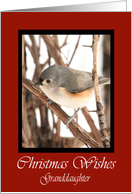 Granddaughter Titmouse Christmas Wishes Card