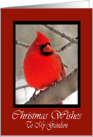Grandson Cardinal Christmas Wishes Card